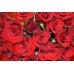 Bouquet de roses vermelles